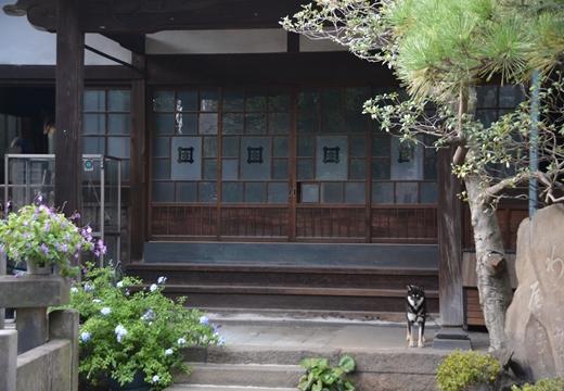 谷中根岸三ノ輪 (101)_R