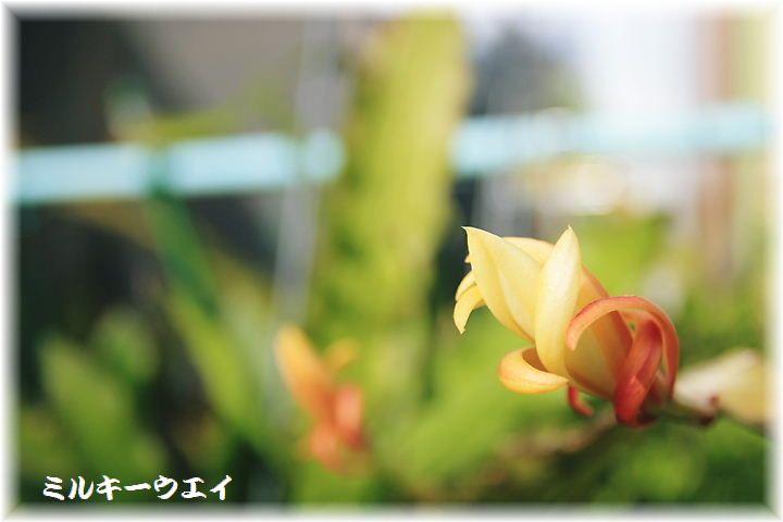 IMGA1_0004.jpg