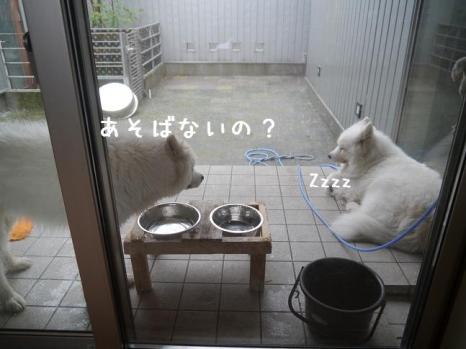 20130622_05.jpg