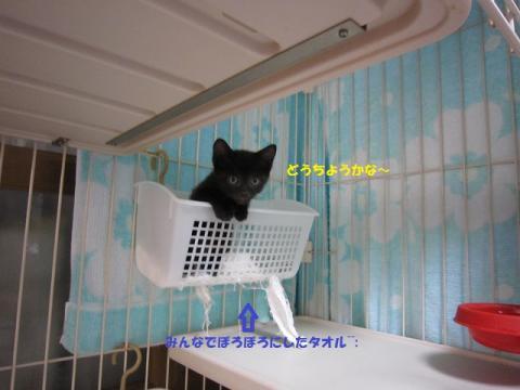 004-20130810.jpg