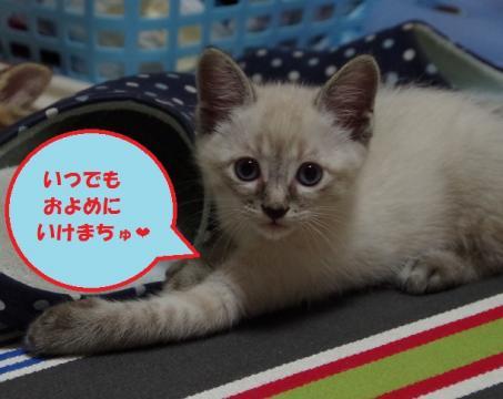 026ポーちゃん20130620