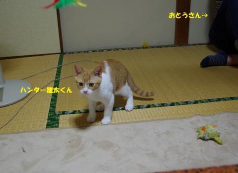 191雛太くん20130630