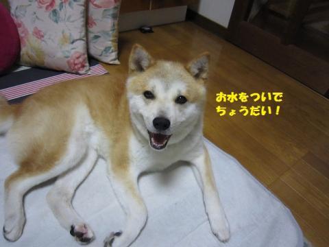 009うめ20130731