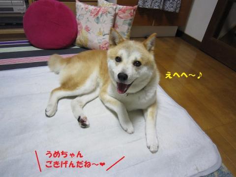 017うめ20130731