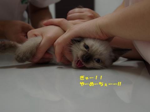 040チョコローゼくん20130819②