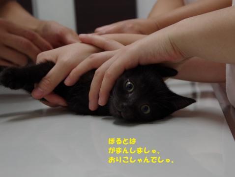 041ぽるとくん20130819②