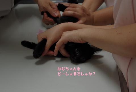 044はなかごちゃん20130819②