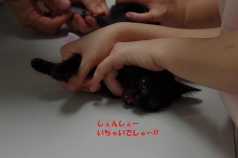 045はなかごちゃん20130819②