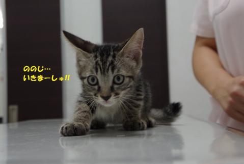 048ののじくん20130819②