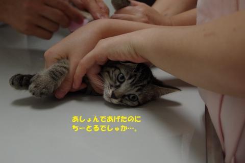 052ののじくん20130819②