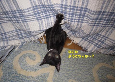 037はなかごちゃん20130831②