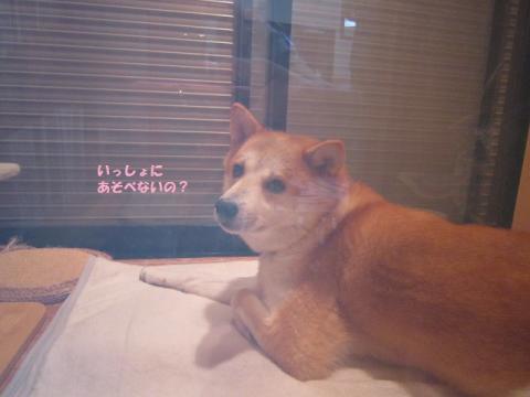 051うめちゃん20130831②