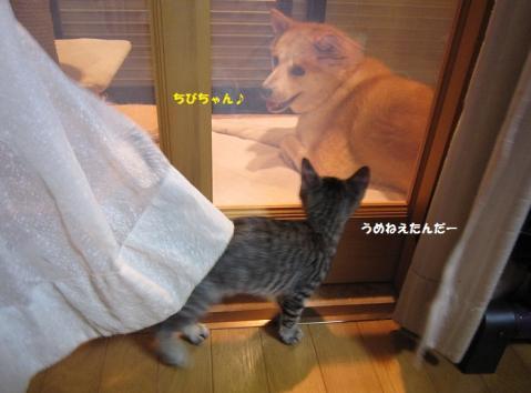 059うめとののじ20130831②