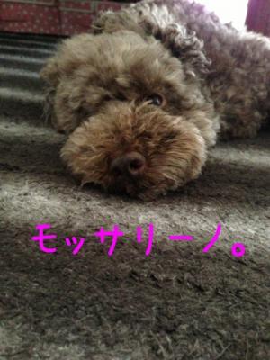 image_20130529150631.jpg