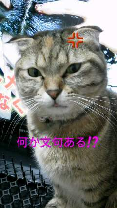 suzu578.jpg