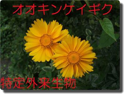 mini_1ookinnkeigiku1_DSCF2022.jpg
