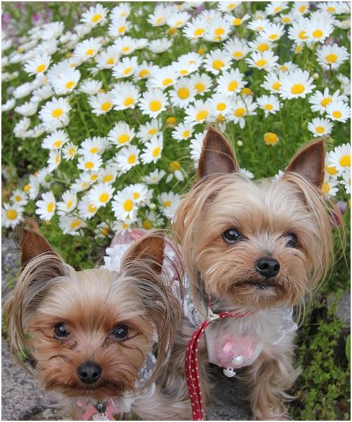 花とクルココ2