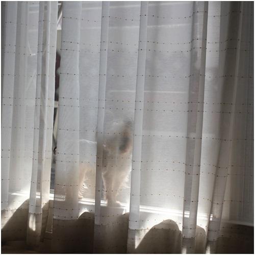 窓辺のココちゃん