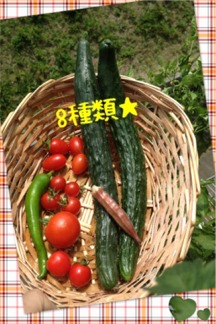 今年の夏野菜8