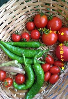 今年の夏野菜9