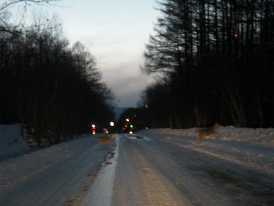 道を横断するシカ