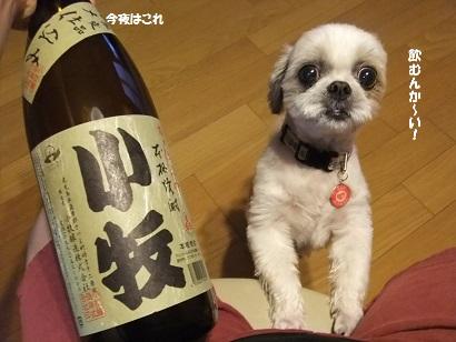 やっぱり飲むんや・・・