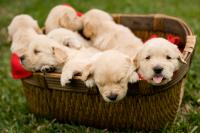 20130728_manyPuppies_003.jpg