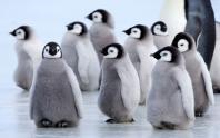 20130729_Penguin_001.jpg