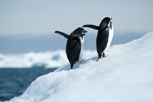 20130729_Penguin_002.jpg