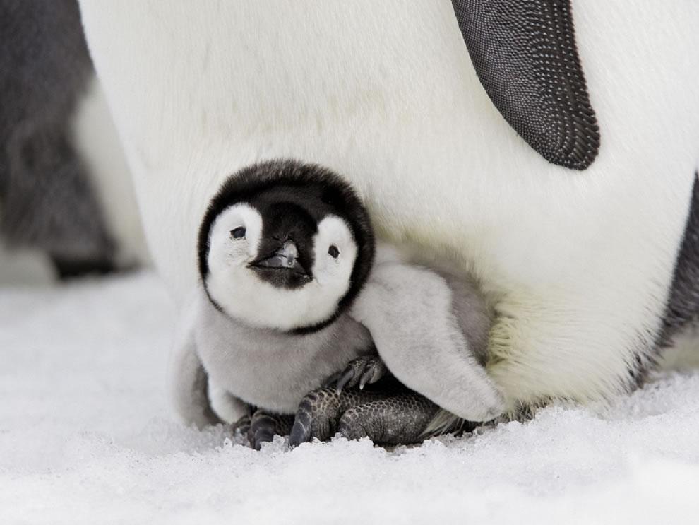 20130729_Penguin_006.jpg