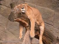20130801_SleepingAnimals_001.jpg