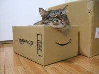 20130806_CatInTheBox_001.jpg