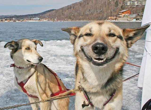 entry_img_61_LOL_Animals_005.jpg