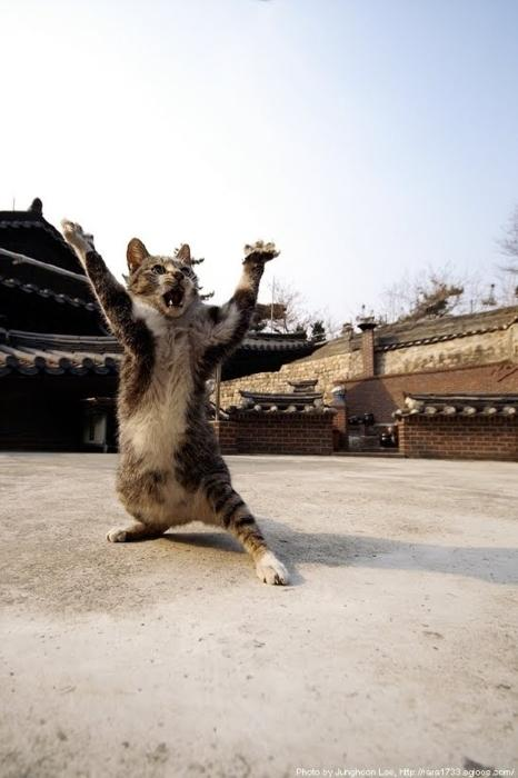 entry_img_67_KungFuCats_007.jpg
