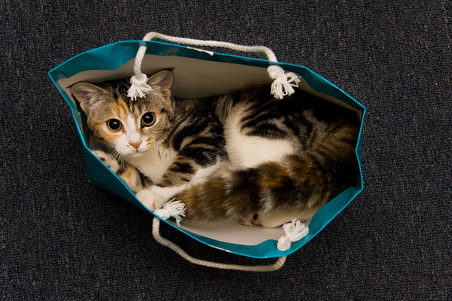 entry_img_70_CatInTheBag_002.jpg