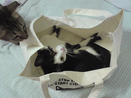 entry_img_70_CatInTheBag_003.jpg