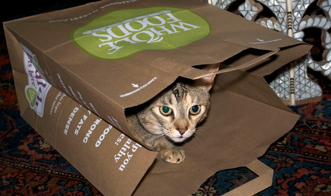 entry_img_70_CatInTheBag_004.jpg