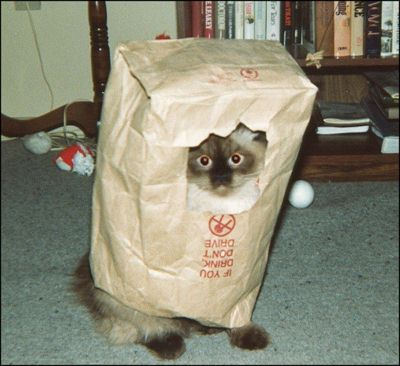 entry_img_70_CatInTheBag_005.jpg