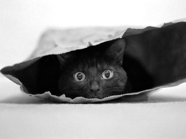 entry_img_70_CatInTheBag_006.jpg