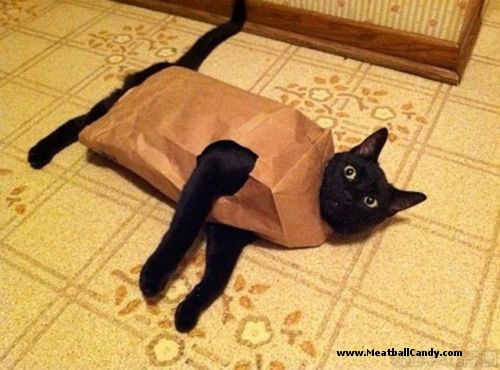 entry_img_70_CatInTheBag_007.jpg