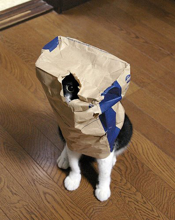 entry_img_70_CatInTheBag_009.jpg
