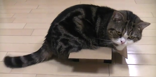 entry_img_71_CatInTheBox_010.jpg