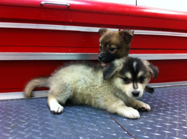 entry_img_76_CutePomskies_003.jpg