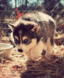 entry_img_76_CutePomskies_008.jpg