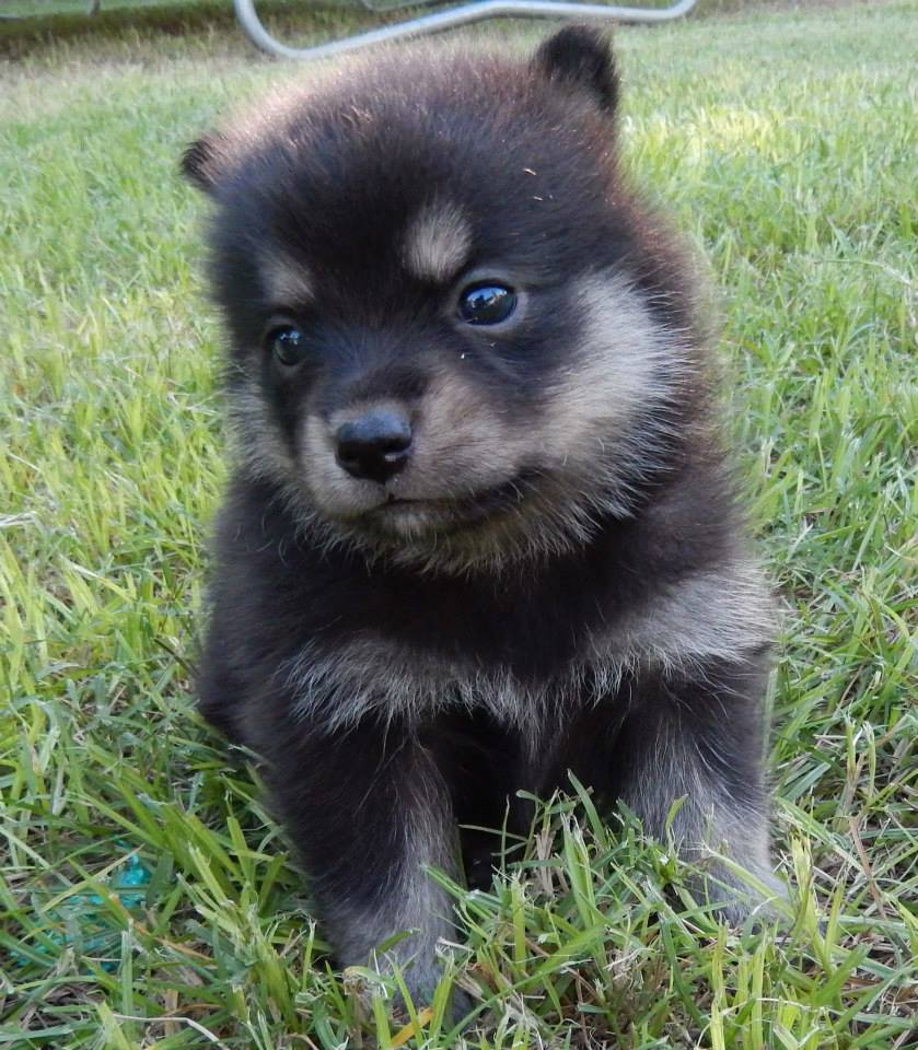 entry_img_76_CutePomskies_009.jpg