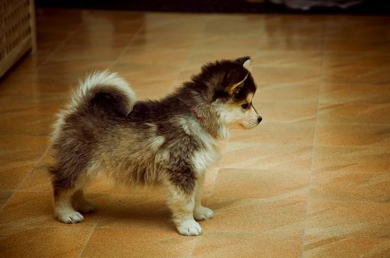 entry_img_76_CutePomskies_010.jpg