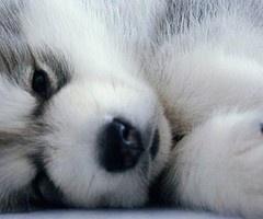 entry_img_77_CutePomskies_004.jpg