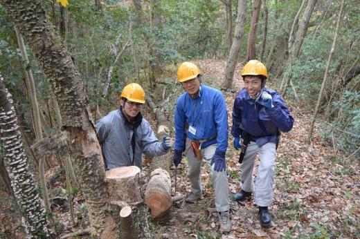 サクラの木伐採