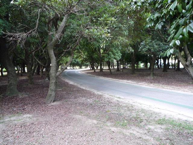 庄内緑地 (2)