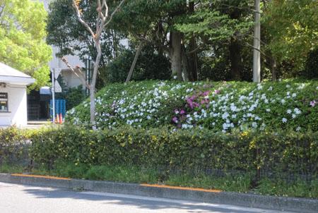 2013-4-22大田市場③